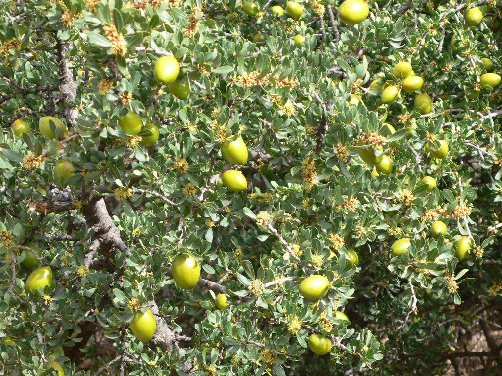 http://www.moebius-bcn.com/uploaded_images/Nueces-de-argan-2-773678.jpg